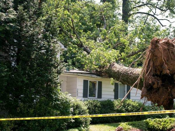 A picture of a emergency tree removal in Ann Arbor, Miami