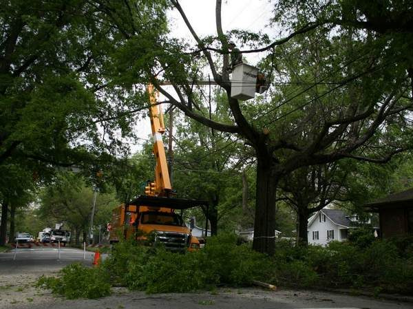 Picture of tree being removed in Ann Arbor