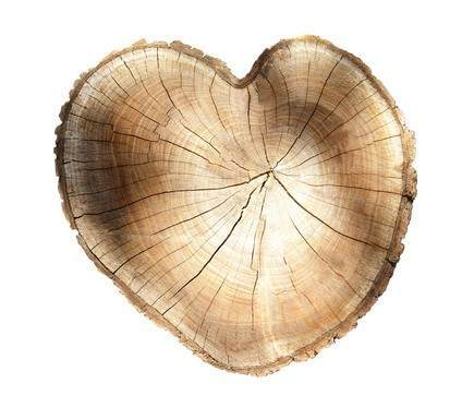 Picture of a heart-shaped stump representing Ann Arbor tree health
