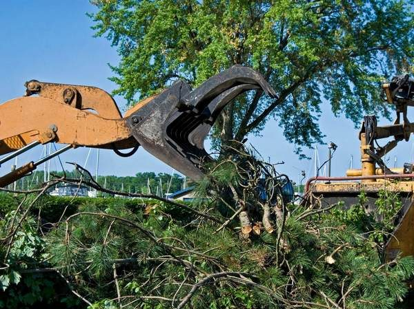 A picture of a tree removal equipment in Ann Arbor, Miami